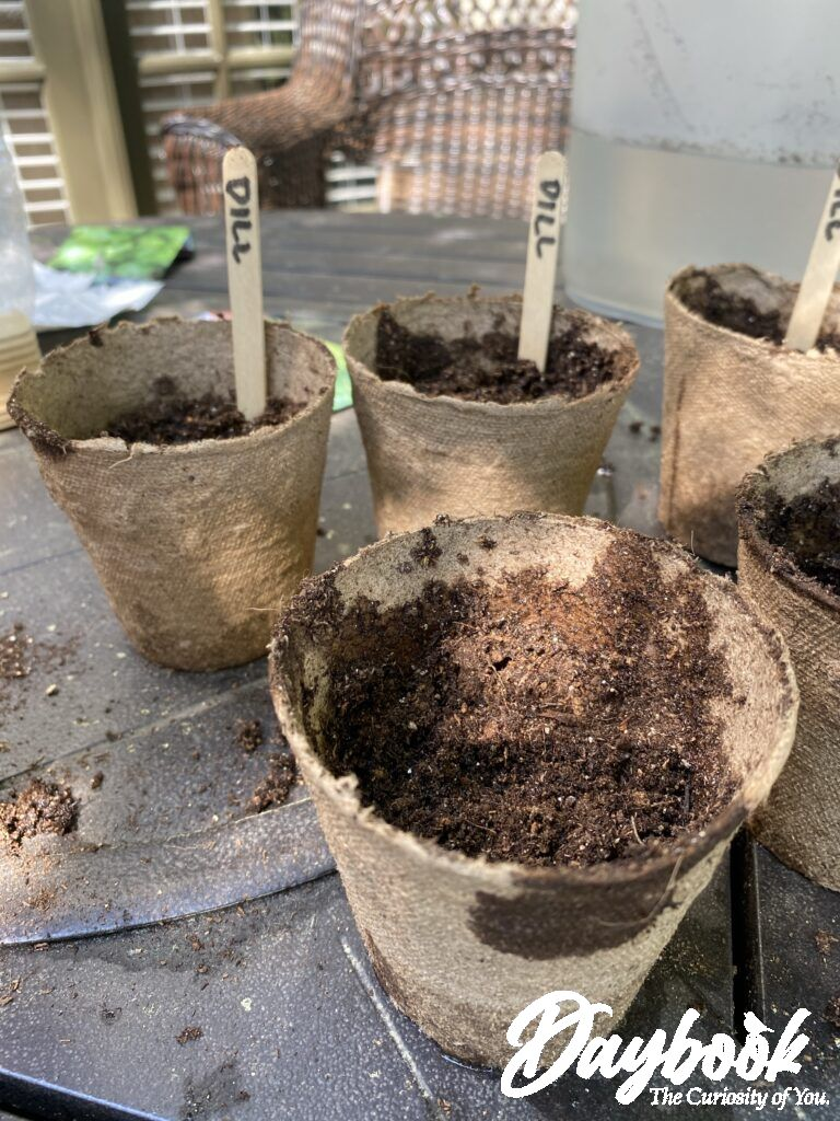 I used Jiffy Pots and Jiffy seed starting soil to give my seeds a head start.