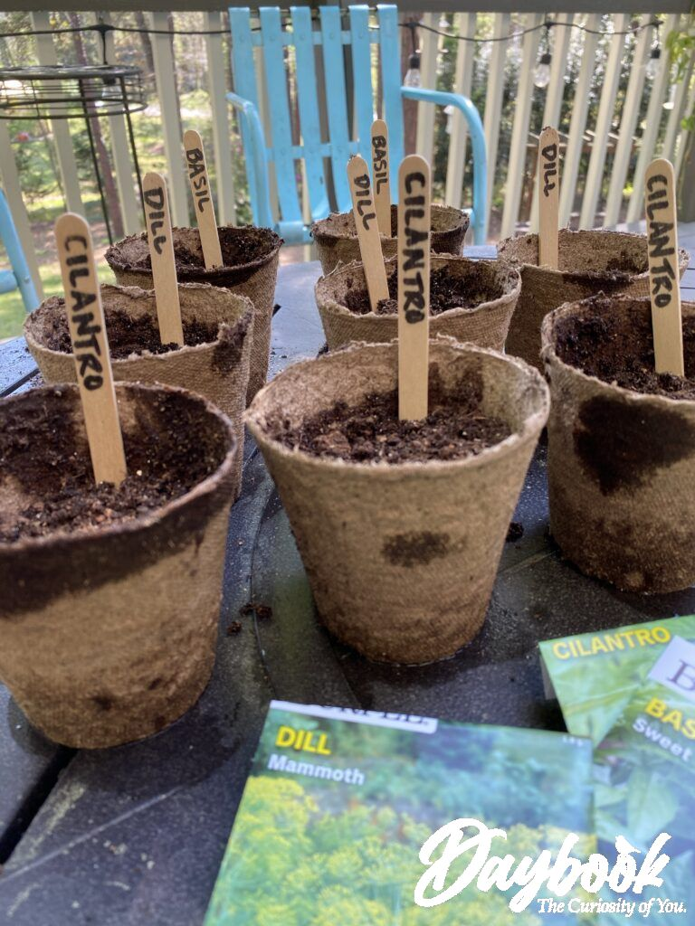 Burpee Seeds are planted and ready for the sun.
