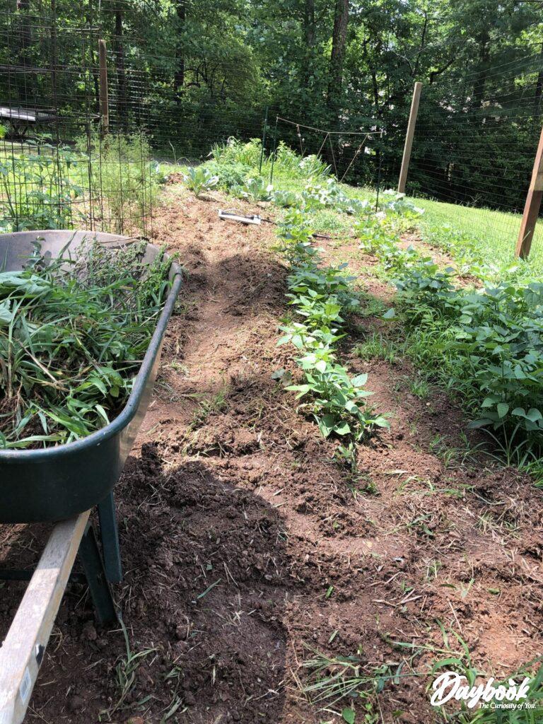 garden with wheel barrow