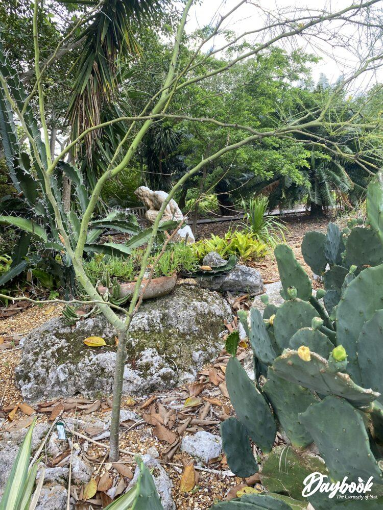 cacti with sculpture behind