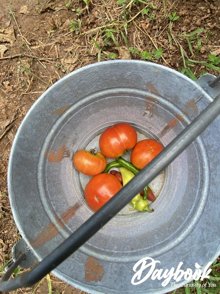 tomatoes and peppers in a silver bucket